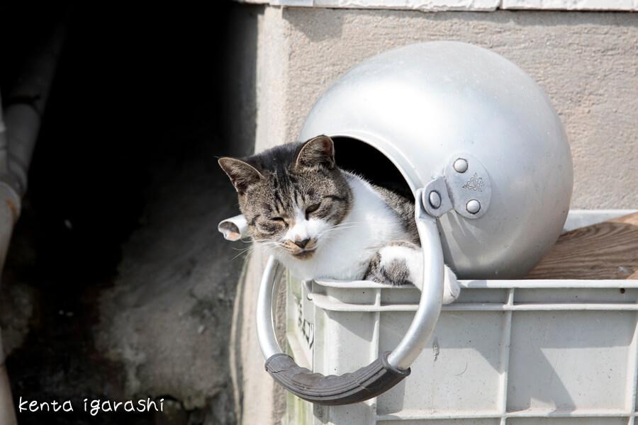 やかんの中から半身を乗り出してダルそうな顔をする猫 by 五十嵐健太