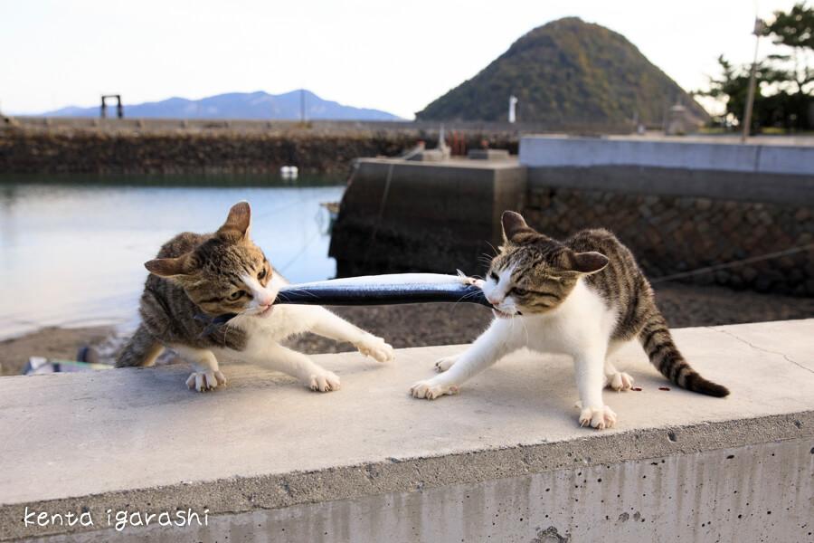 港で魚を奪い合う猫 by 五十嵐健太