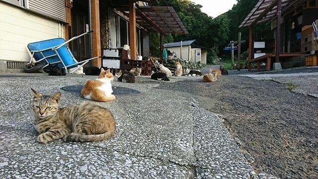 大分の猫島「深島(ふかしま)」にいるたくさんの猫たち