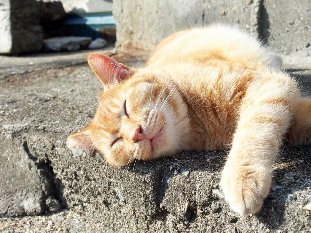 外で熟睡する猫のイメージ写真