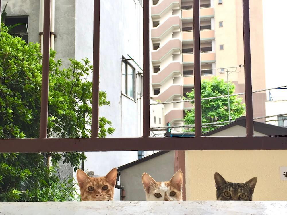ベランダの外からこっちを見つめる3匹の猫 by 「庭×猫...ときどき犬 フォトコンテスト」最優秀(庭猫)賞