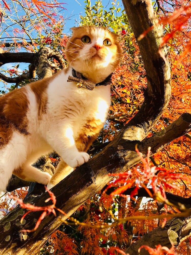 庭の木にのぼる猫 by 「庭×猫...ときどき犬 フォトコンテスト」にゃんダフル賞