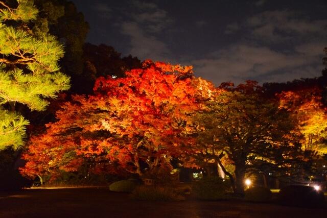 ライトアップされた六義園の紅葉