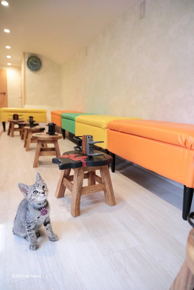 床に座って上を見上げる猫 by 2020年 保護猫カフェひだまり号チャリティカレンダー