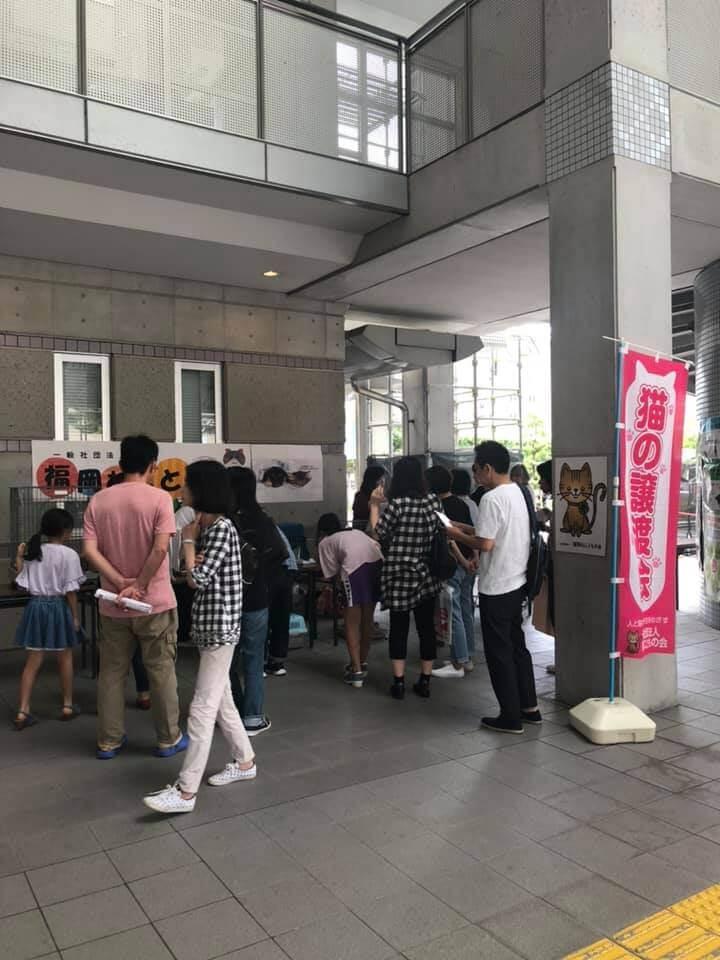 保護猫の譲渡会開催風景 by 福岡ねこともの会