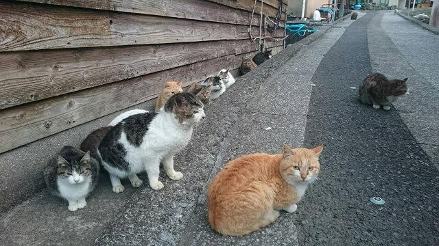 島の人口より猫の数の方が多い大分の猫島「深島(ふかしま)」