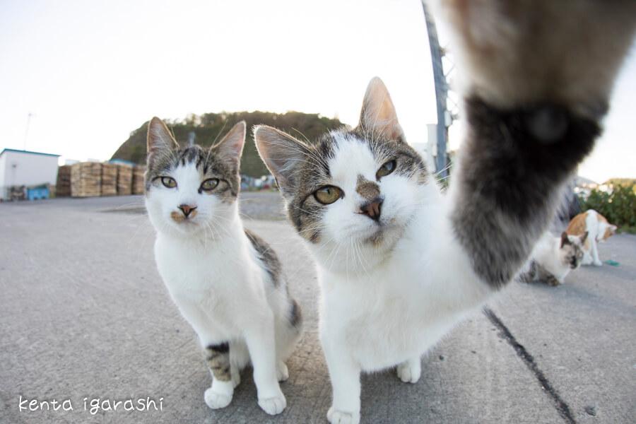 カメラに手をかける野良猫 by 五十嵐健太