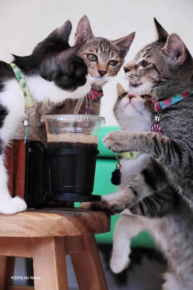 人間のドリンクに群がる猫 by 2020年 保護猫カフェひだまり号チャリティカレンダー