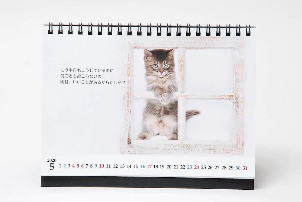 志茂田景樹さんの子猫カレンダー片面(ネコ写真メイン) by 猫様のお言葉 ネ・コ・ト・バ2020