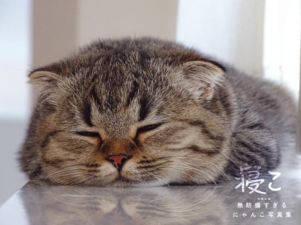 顎を床に付けて眠る猫 by 寝こ 無防備すぎるにゃんこ写真集
