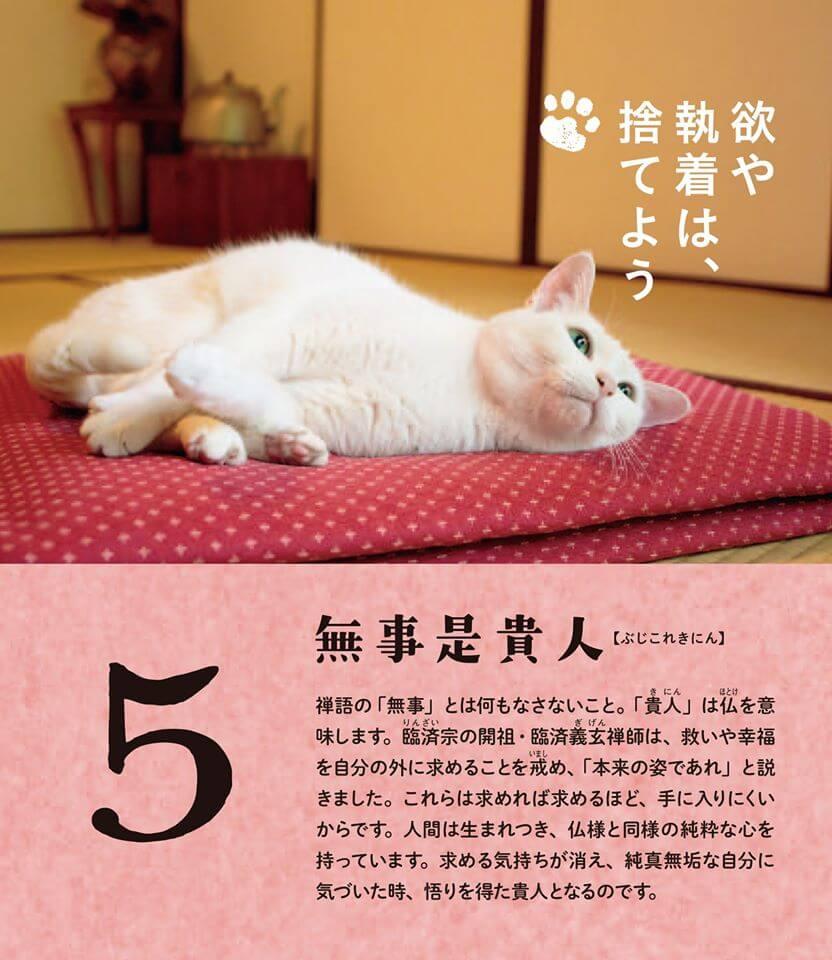 猫本「ねこ禅 人生がふニャっとなごむ50の教え」のワンシーンに登場する白猫「あなご」 by 五十嵐健太