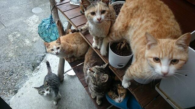 観光客に近寄ってくる野良猫たち by 大分県の猫島「深島(ふかしま)