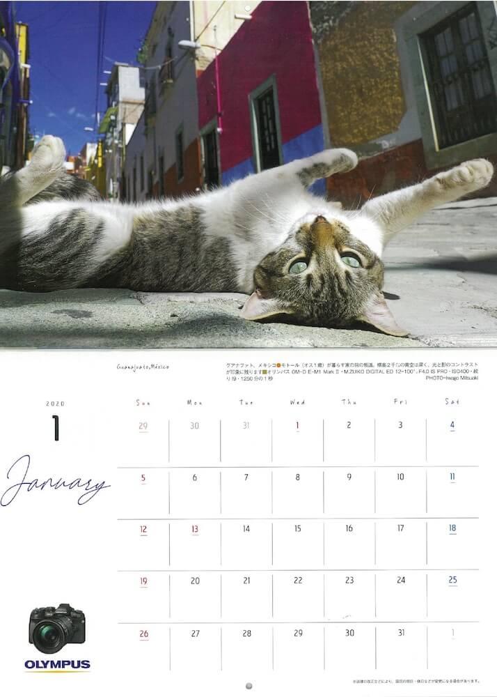 アサヒカメラ2019年12月号に収録されているネコカレンダーの1枚、メキシコ・グアナファトの猫 by 岩合光昭