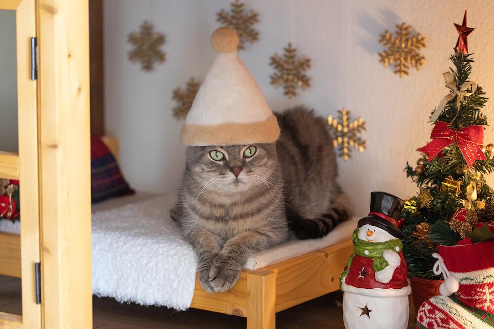 B.LEAGUE千葉ジェッツのマスコット「ジャンボくん」を猫の抜け毛で作った作品をかぶる猫 by rojiman