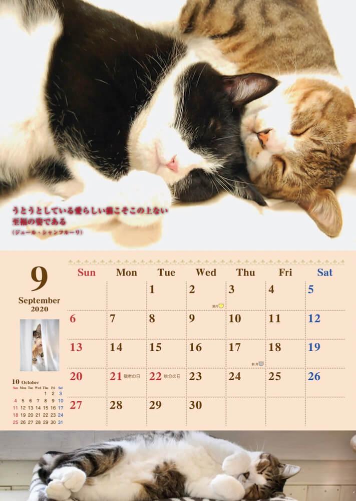 猫にまつわる名言も掲載されている猫カレンダー by 福岡ねこともの会