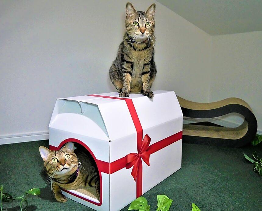 上にも猫が乗れれう爪とぎ一体型の猫ハウス「つめとぎプレゼントBOX」