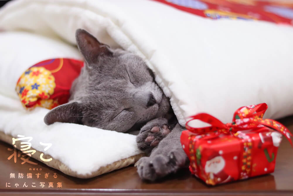 布団に入って眠るロシアンブルー by 寝こ 無防備すぎるにゃんこ写真集
