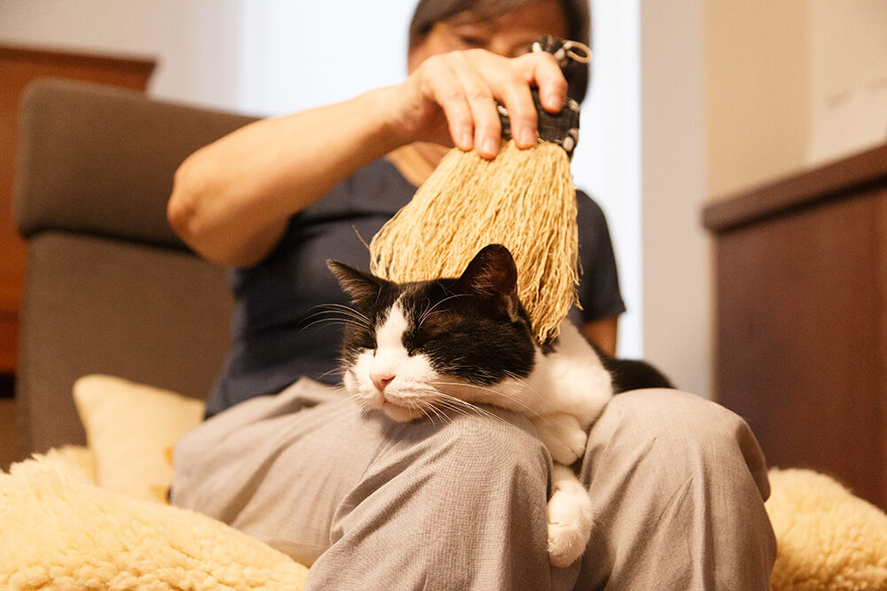 高倉工芸のペット用ほうき「なでねこ」の使用イメージ、ほうきで撫でられて気持ちよさそうにしている黒白ハチワレ猫