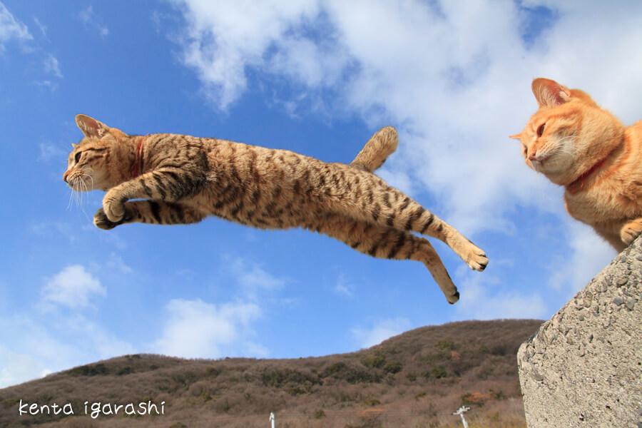 ジャンプする飛び猫を下から撮影した写真 by 五十嵐健太