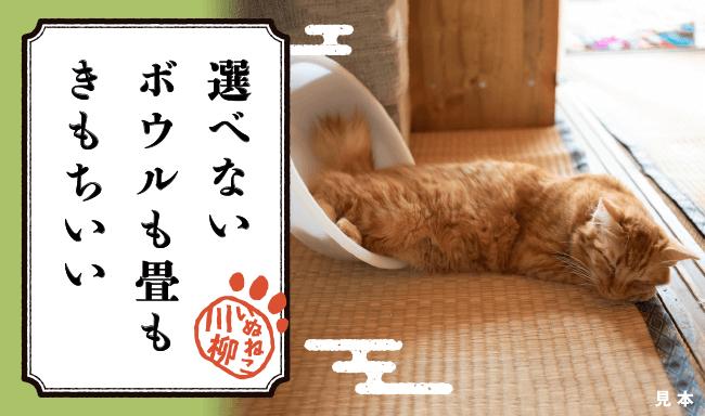 猫あるあるな川柳 作品イメージ2