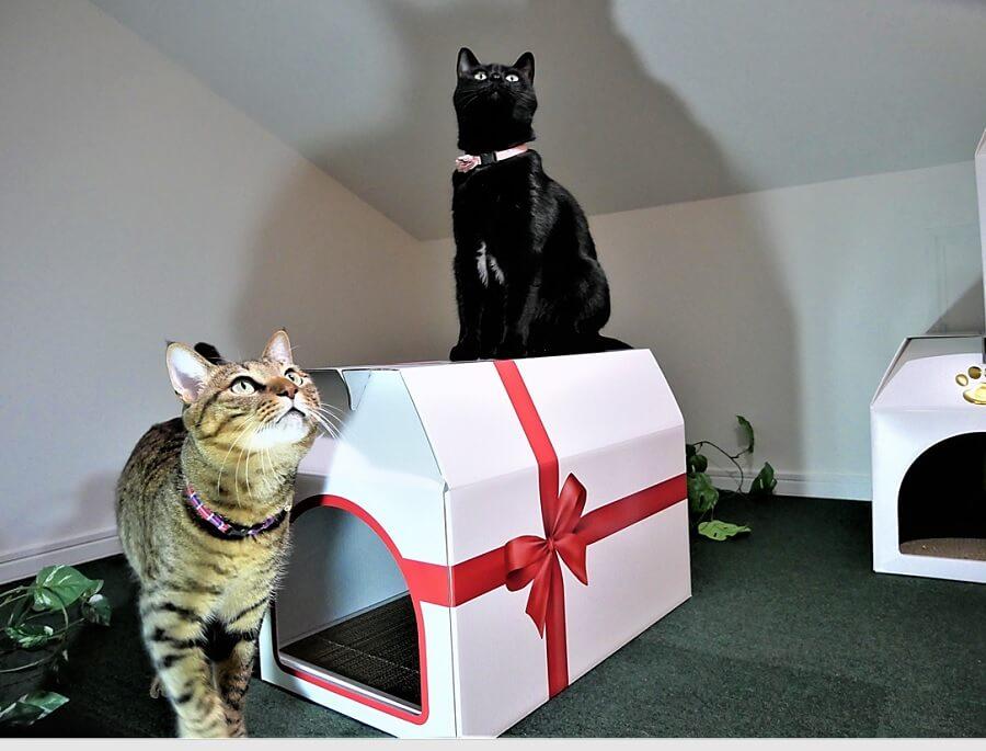 2匹の猫が「つめとぎプレゼントBOX」で遊ぶイメージ