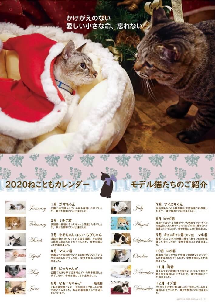 カレンダーに登場するモデル猫のプロフィール