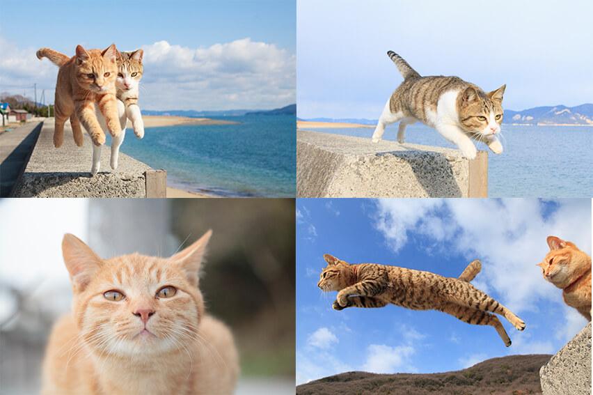 猫写真家・五十嵐健太さんの代表作「飛び猫」