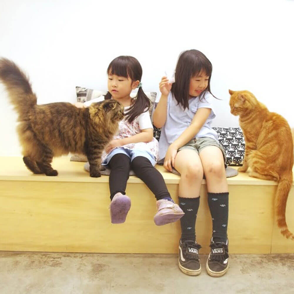 Moff animal cafeグランベリーパークの利用イメージ、猫と触れ合う子どもたち