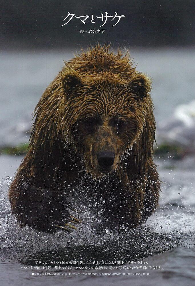 アサヒカメラ2019年12月号に収録されているクマとサケの命懸けの闘い by 岩合光昭