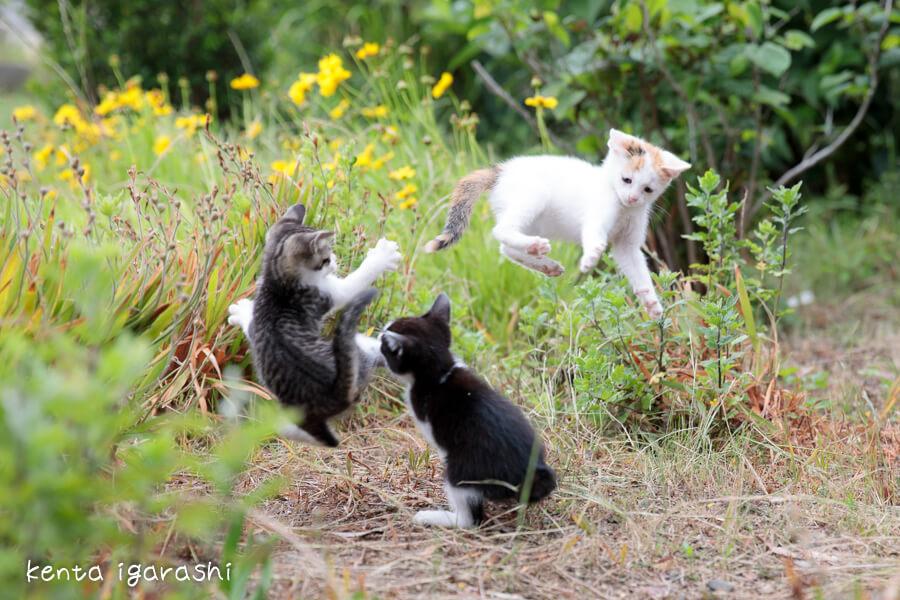 宙を舞って格闘する子猫たち by 五十嵐健太