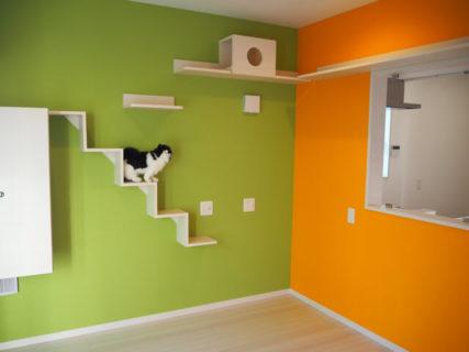 こんな家に猫と暮らしてみたいニャ!ねこ検定の監修者が設計したこだわりの分譲住宅が公開