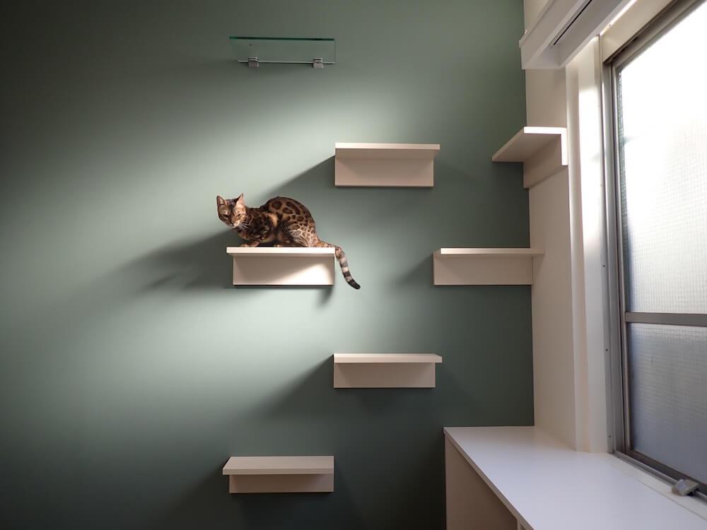 毎日の生活を猫と過ごせる空間づくりのプロジェクト『ねことすまふ』第一弾の物件