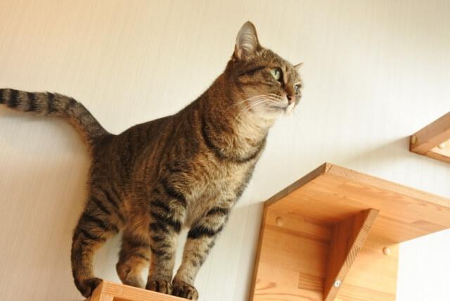 猫共生住宅のイメージ