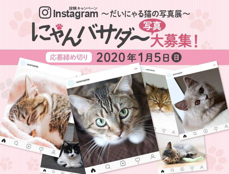 大丸東京店の猫写真展「だいにゃる猫の写真展」のメインビジュアル