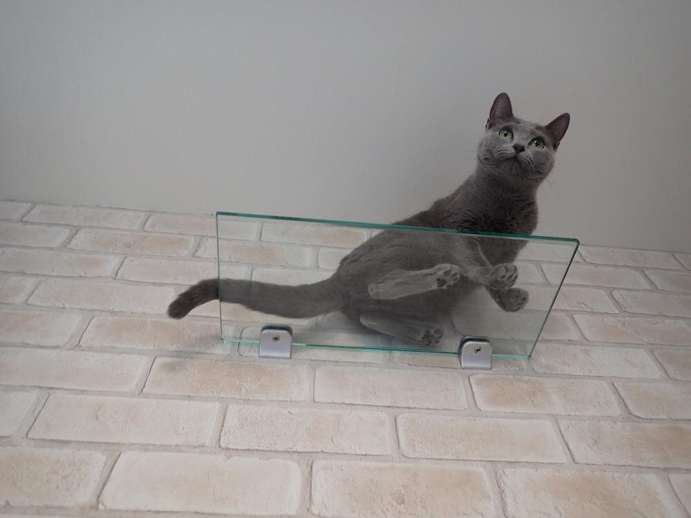 猫の肉球が見える透明なクリアボード by 目黒の猫共生住宅「ねことすまふ」