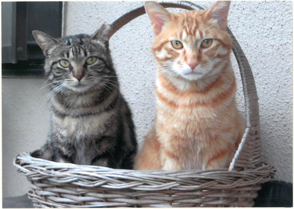 果物籠に座ってこちらを見つめる兄弟猫 by 大佛次郎×ねこ写真展の入賞作品