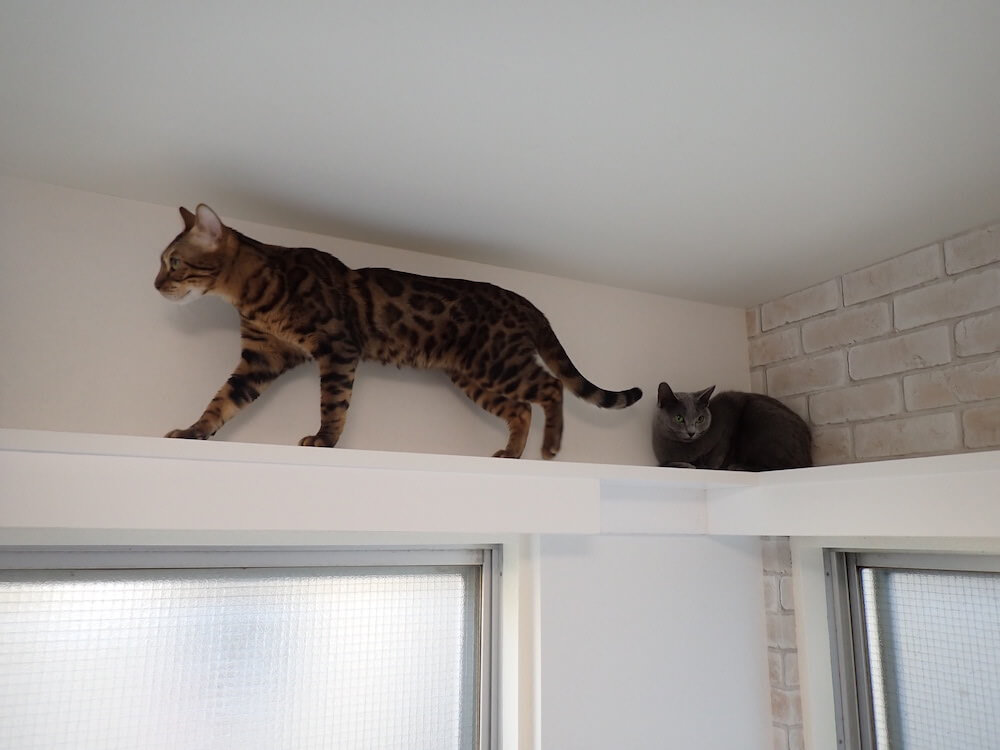 キャットウォークを歩く猫 by 目黒の猫共生住宅「ねことすまふ」