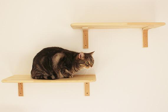 キャットステップにのぼる猫 by ワコーレヴィアーノ高丸 猫の家