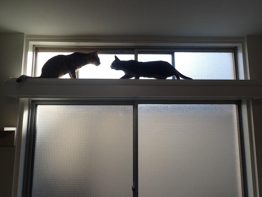 キャットウォークの上で向かい合う2匹の猫 by 目黒の猫共生住宅「ねことすまふ」