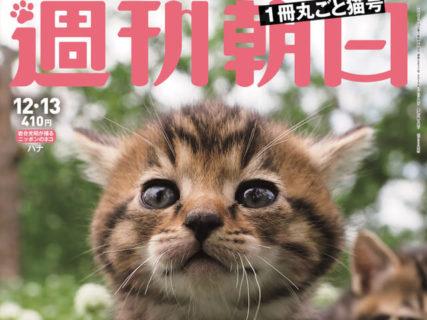 週刊朝日が3年連続で「ネコ特集号」を発売!今年は付録が増量&表紙は岩合さんの猫写真ニャ