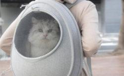 ニャンとも可愛いたまご型♪ 台湾で人気のリュック型の猫ハウス「EGGY」が日本初上陸