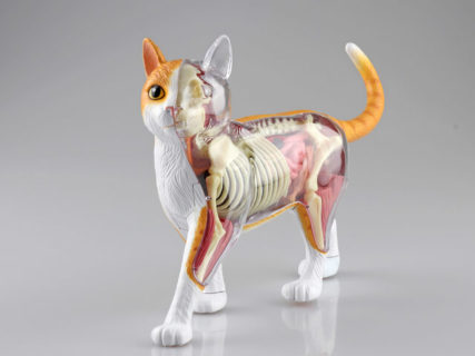 猫の体のつくりが分かる立体パズル「猫の解剖モデル」第2弾は茶白の猫ちゃんですニャ