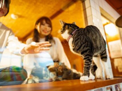 部屋の窓から猫が見える!ガラス1枚で猫カフェと仕切られたホテル「ねこ旅籠」がオープン