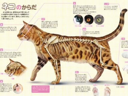 ニャンと460種類の猫・犬・小動物を収録!学研の図鑑LIVEシリーズ最新刊はBBCの映像付き