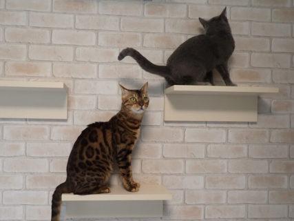 目黒に猫と快適に暮らせる賃貸物件が誕生!築40年のビルを猫共生住宅としてリノベーション