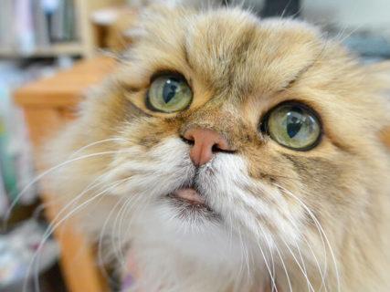 猫の日企画もあるニャ〜!5周年を迎える「ねこ休み展」冬の本祭が1月24日よりスタート