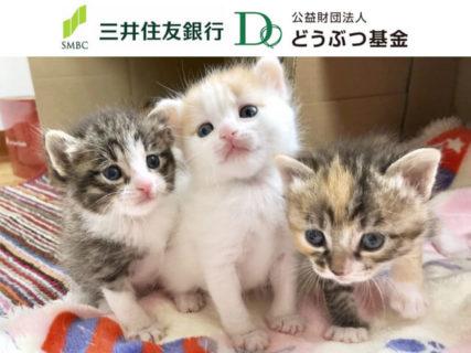 犬猫の命を救うために遺産を寄付するという選択肢、三井住友銀行×どうぶつ基金が協定を締結