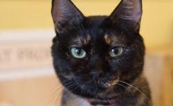 美味しい珈琲や本格手作りカレーを楽しめる猫カフェ「SAVE CAT CAFE」の店内を紹介するニャ