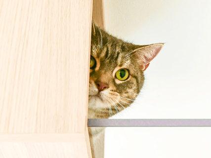 猫と2階建てのお家で暮らしてみたい…そんな夢を叶える賃貸住宅「猫の家」が登場