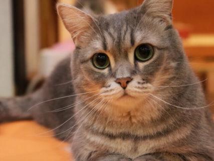 犬猫のパルボウイルスを99%以上抑制する実験効果を確認、パナソニックの子会社が発表